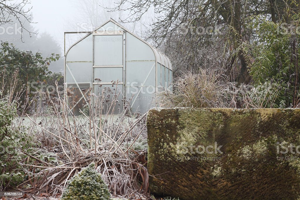 Winter garden stock photo