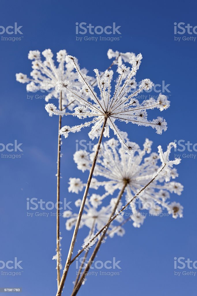 winter grass royalty-free stock photo