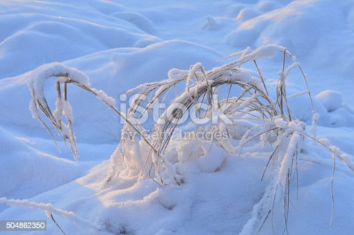 istock Winter grass under white snow frosty morning 504862350