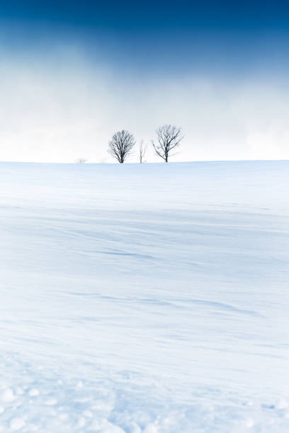 冬の森美瑛の青空 - 雪景色 ストックフォトと画像