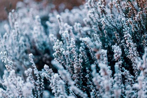Winter heather background
