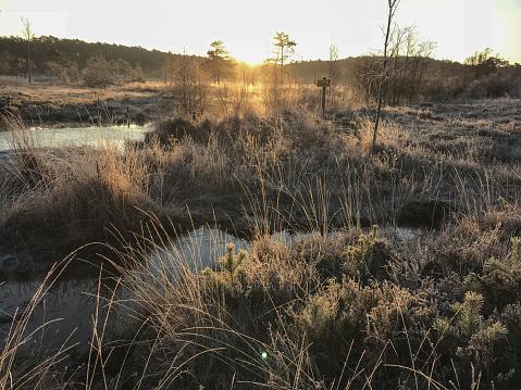 Winter heathland