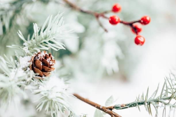Fondo de vacaciones de invierno - foto de stock