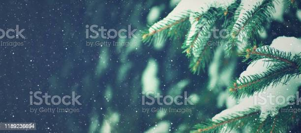 Photo of Winter Holiday Evergreen Christmas Tree Pine Branches Covered With Snow and Falling Snowflakes