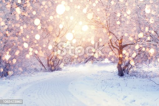 Winter wonderland. Park covered by snow. Snowy footpath in park with frosty trees illuminated by christmas lights. Wonderful christmas or New Year background. Winter holiday illumination.