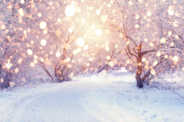 iluminación de vacaciones de invierno - invierno fotografías e imágenes de stock