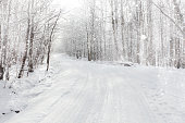 Forest road with glittering snow