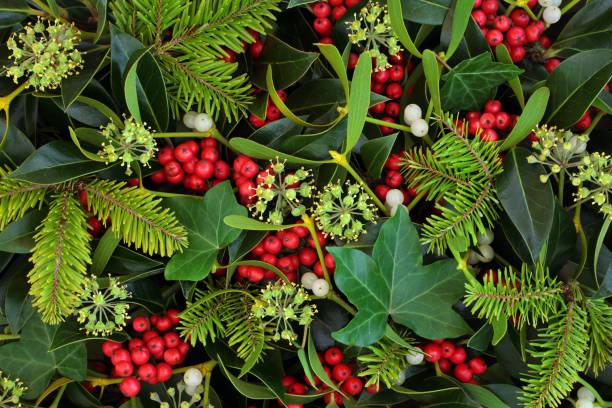 Winter Holly Ivy and Mistletoe Background stock photo