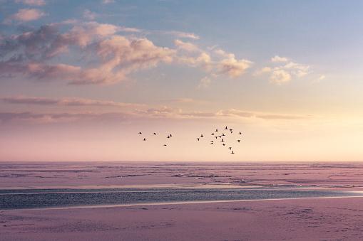 Winter Horizon at a frozen lake