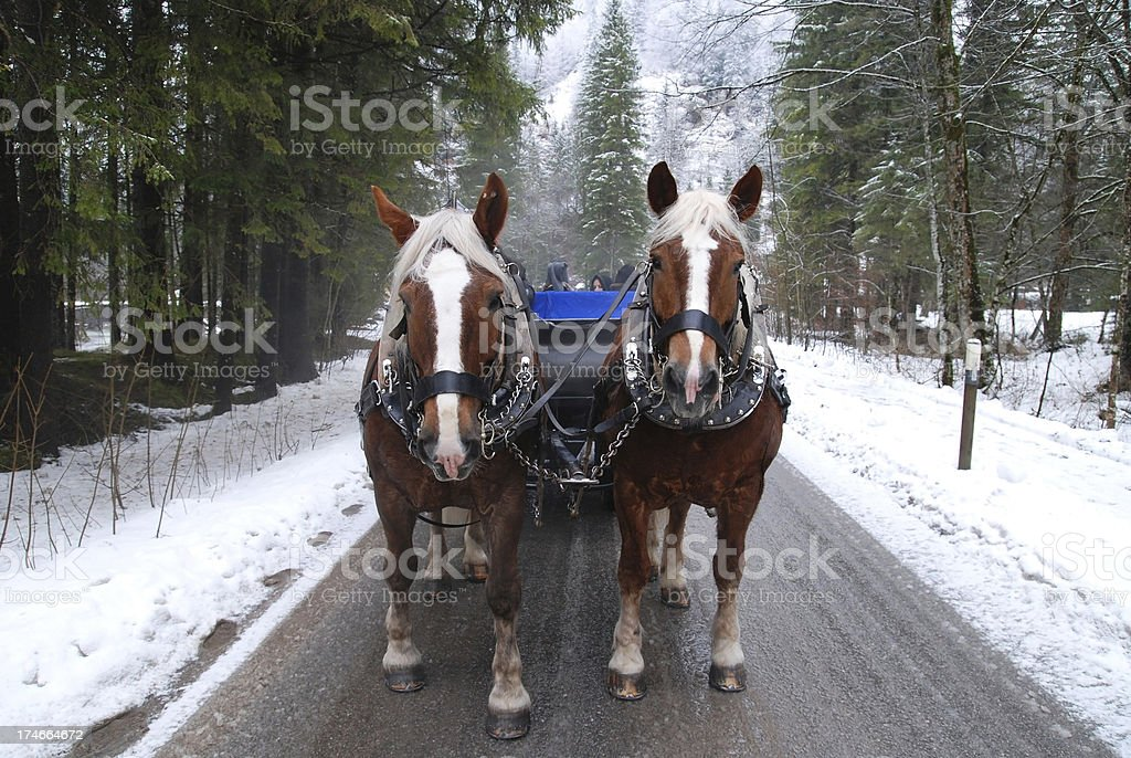 winter horse carriage skid stock photo