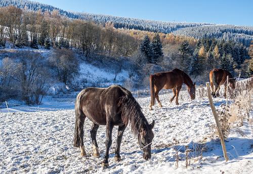 Winter horse pasture