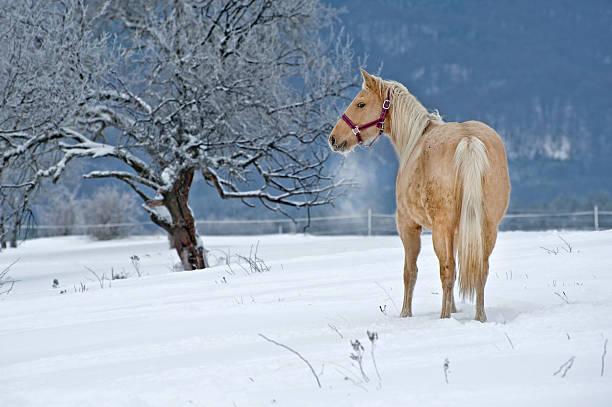 Winter Horse stock photo