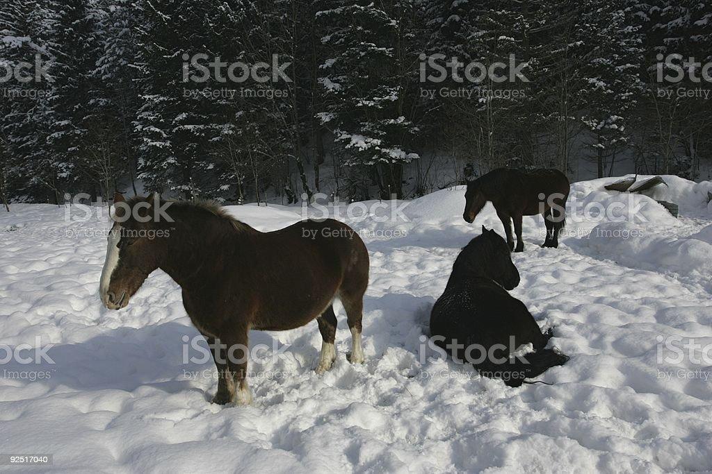 winter horses royalty-free stock photo