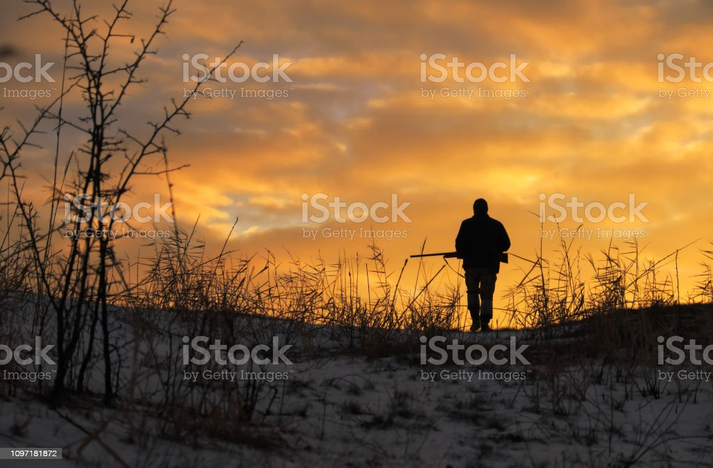 Winter hunting at sunrise. Hunter moving With Shotgun and Looking For Prey. stock photo