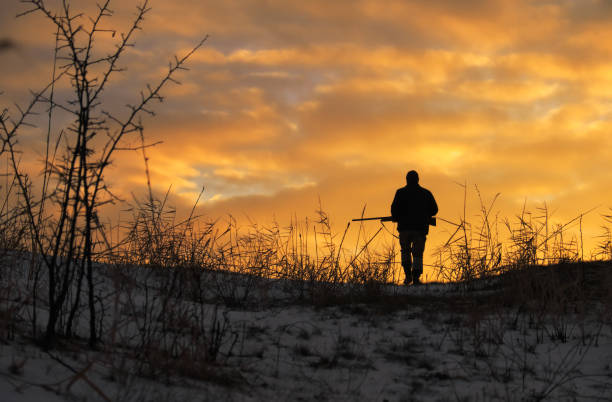 Winter hunting at sunrise. Hunter moving With Shotgun and Looking For Prey. Winter hunting at sunrise. Hunter moving With Shotgun and Looking For Prey. hunter stock pictures, royalty-free photos & images