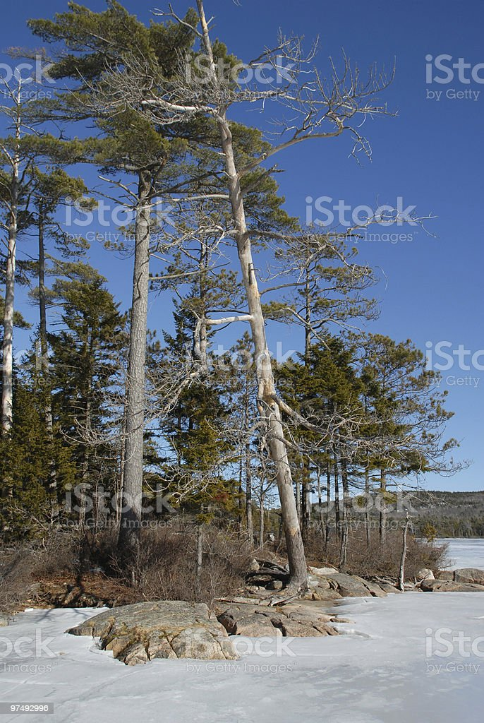Winter ice clings to lake shore in Maine royalty-free stock photo