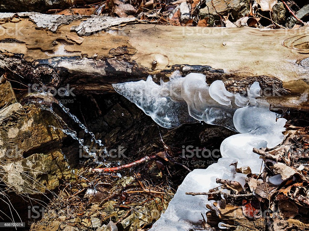 Winter Ice & Leaves royalty-free stock photo