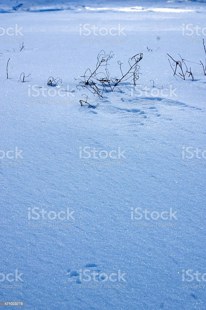winter ice pattern royalty-free stock photo