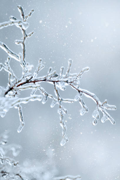 Winter icy branch of a tree on snow background stock photo
