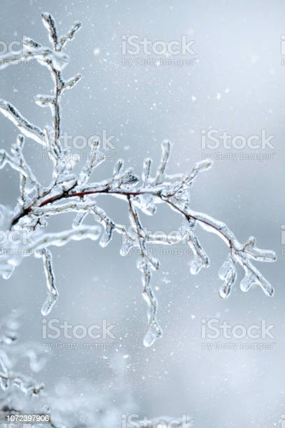Photo of Winter icy branch of a tree on snow background