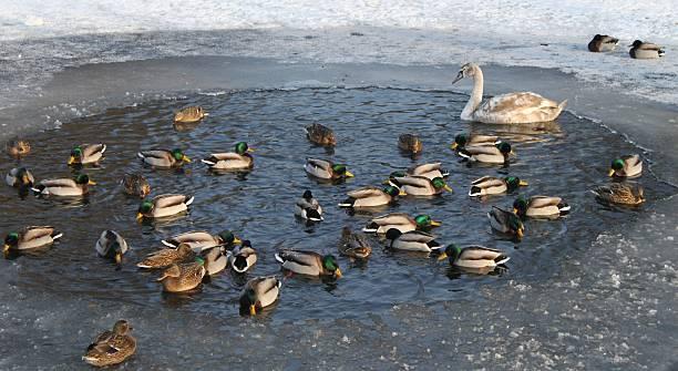 winter im park - isvak bildbanksfoton och bilder
