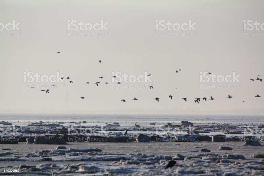 Winter im Watt stock photo