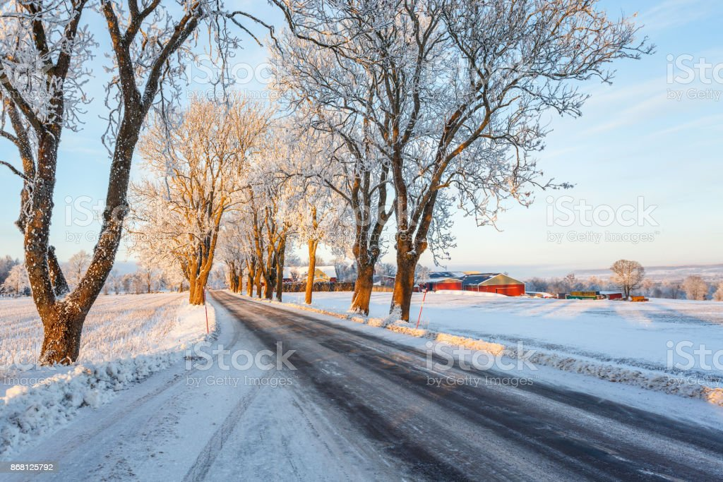 Winter in a tree lined road in the country stock photo
