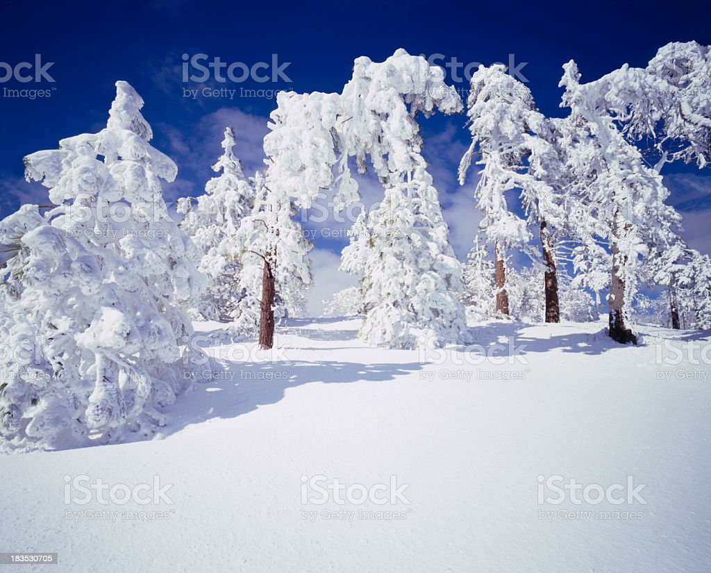 Winter In California   (g) royalty-free stock photo