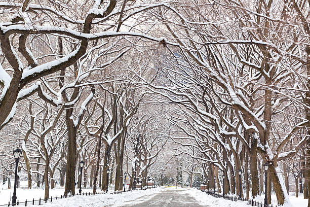 winter in central park poet;s walk - central park manhattan zdjęcia i obrazy z banku zdjęć