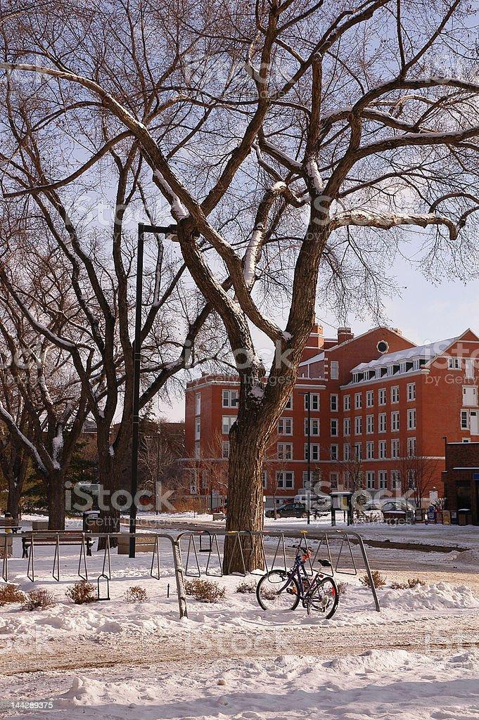 winter in Edmonton stock photo