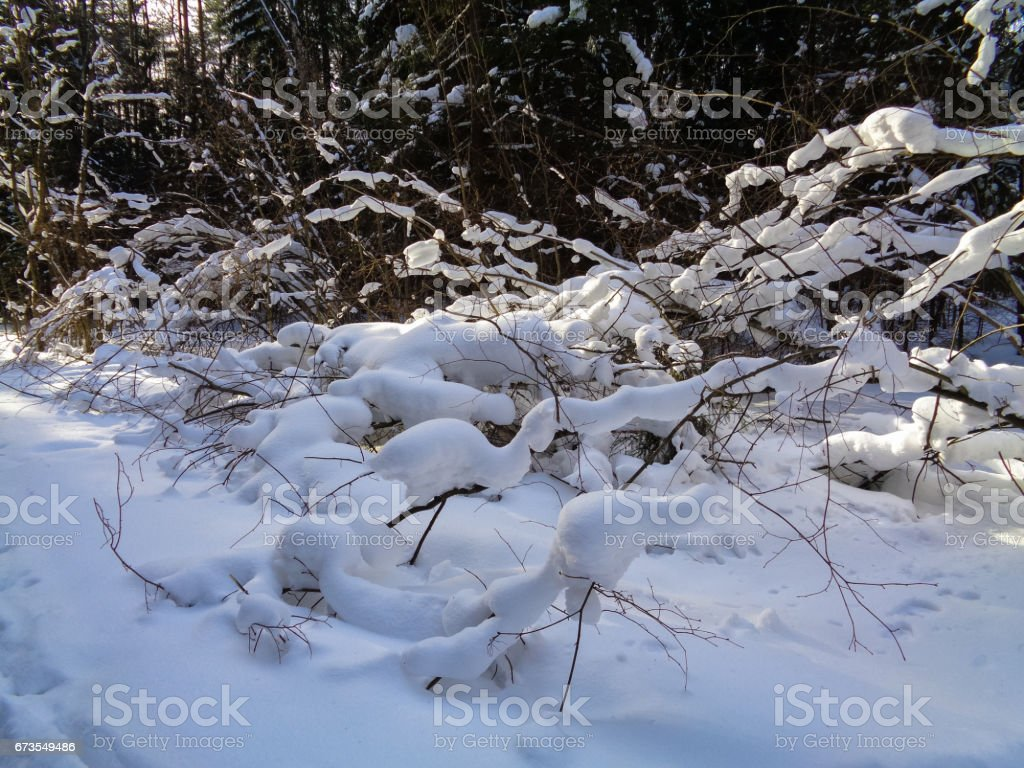 Winter in Europe. Tree branches under the snow royalty-free stock photo