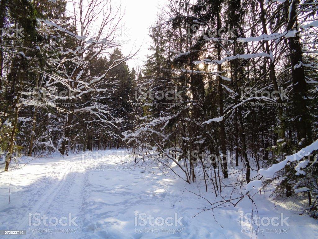 Hiver en Europe. Branches d'arbres sous la neige photo libre de droits