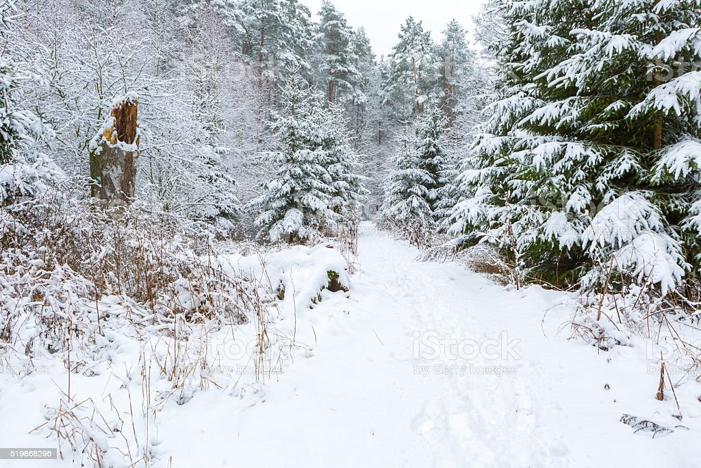 Winter in european forest stock photo
