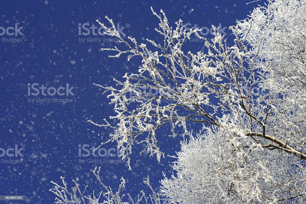 Winter in Finland - snow on branches II royalty-free stock photo