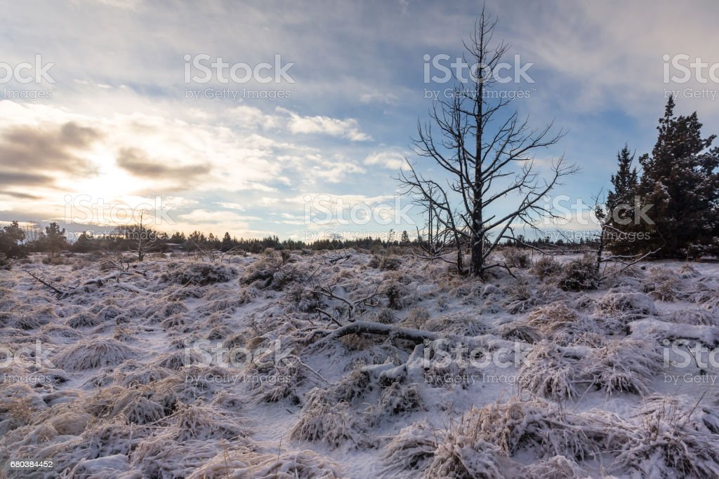 Winter in high desert royalty-free stock photo