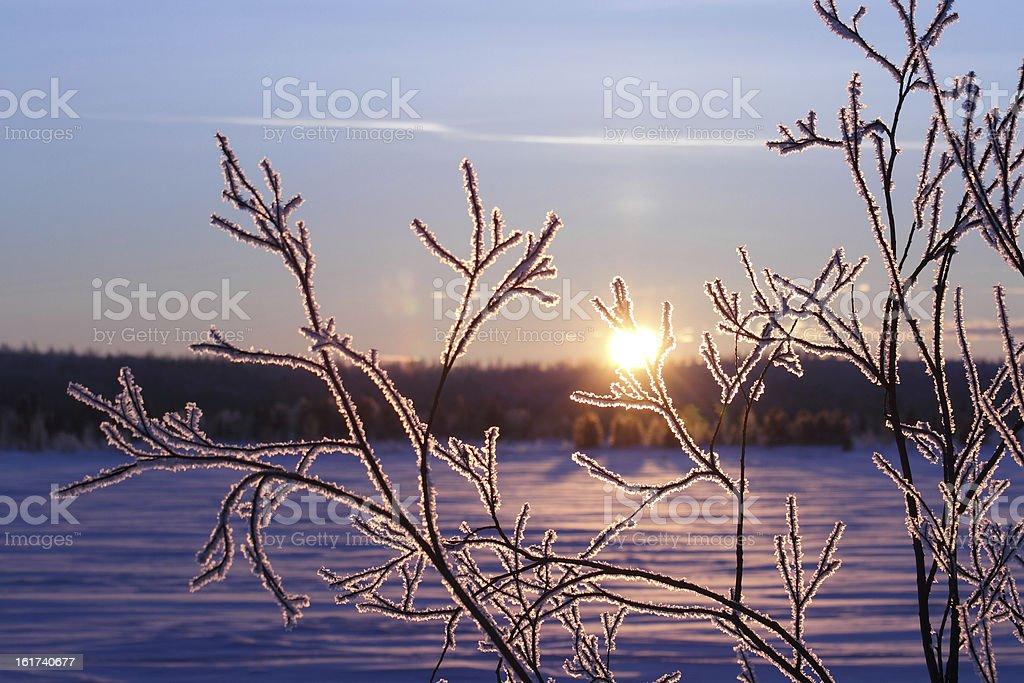 Winter in Siberia royalty-free stock photo