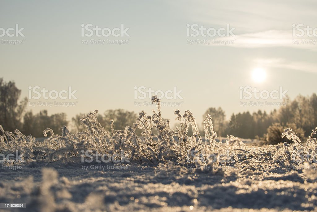 Winter in southern Sweden (XXXLarge) stock photo