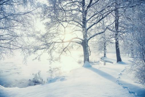 Winter landscape in