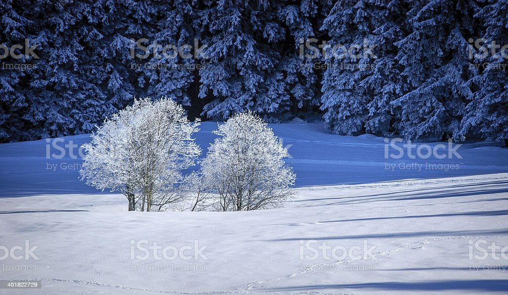 winter in the bavarian mountains royalty-free stock photo