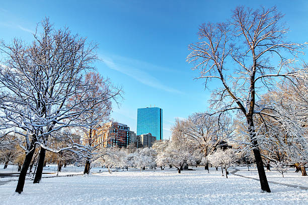 Winter in the Boston Public Garden stock photo