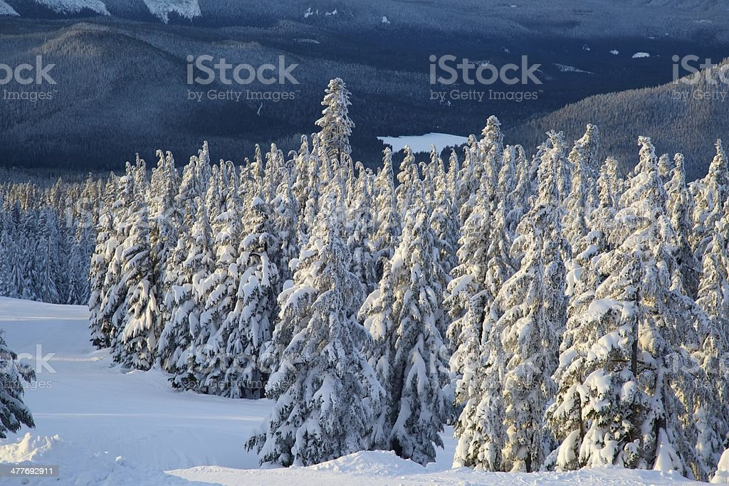 Winter in the cascade mountains stock photo