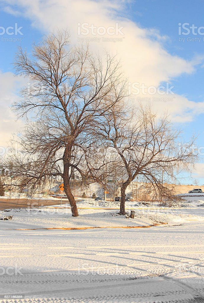 Winter in the city. Bare trees and tracks in the snow. stock photo