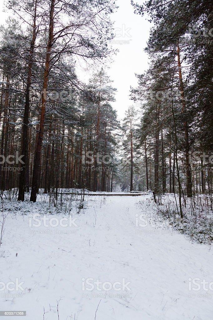 Zima w lesie zbiór zdjęć royalty-free