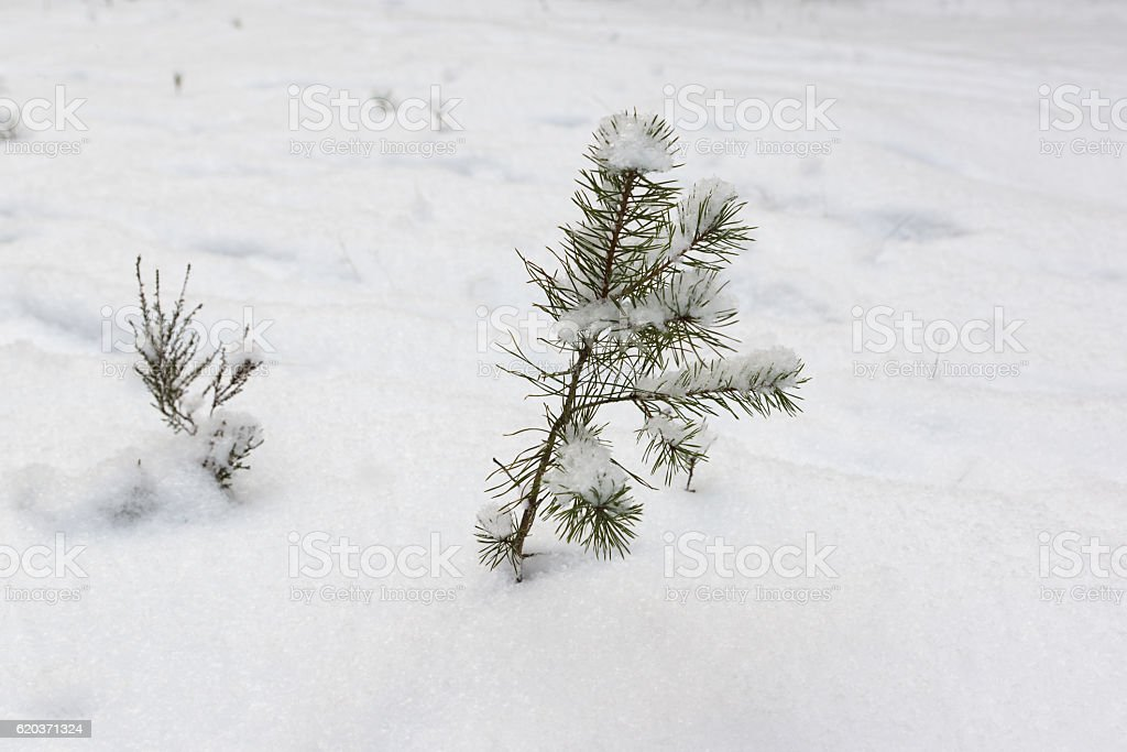 Inverno na floresta foto de stock royalty-free
