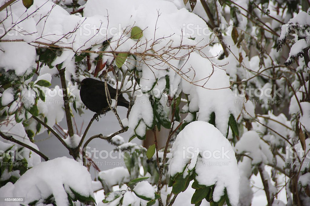 Winter in the garden royalty-free stock photo