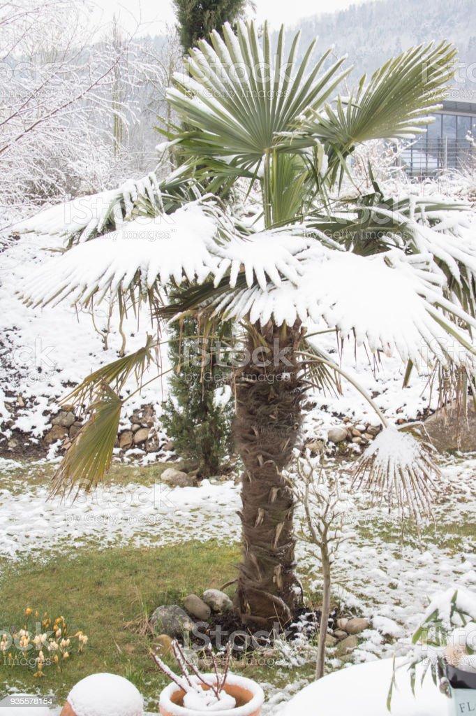 Winter in the garden stock photo
