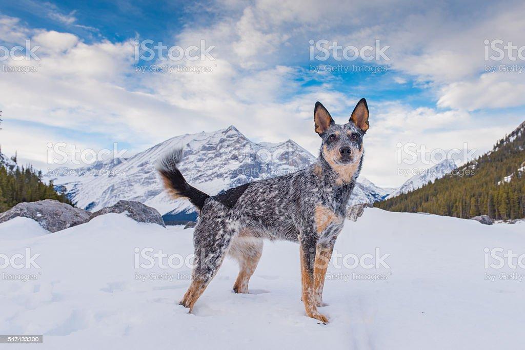 Zima w górach  – zdjęcie