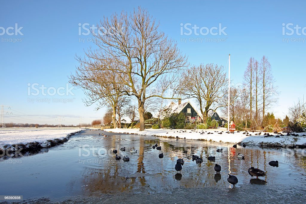Winter in the Netherlands - Royalty-free Animal Stock Photo