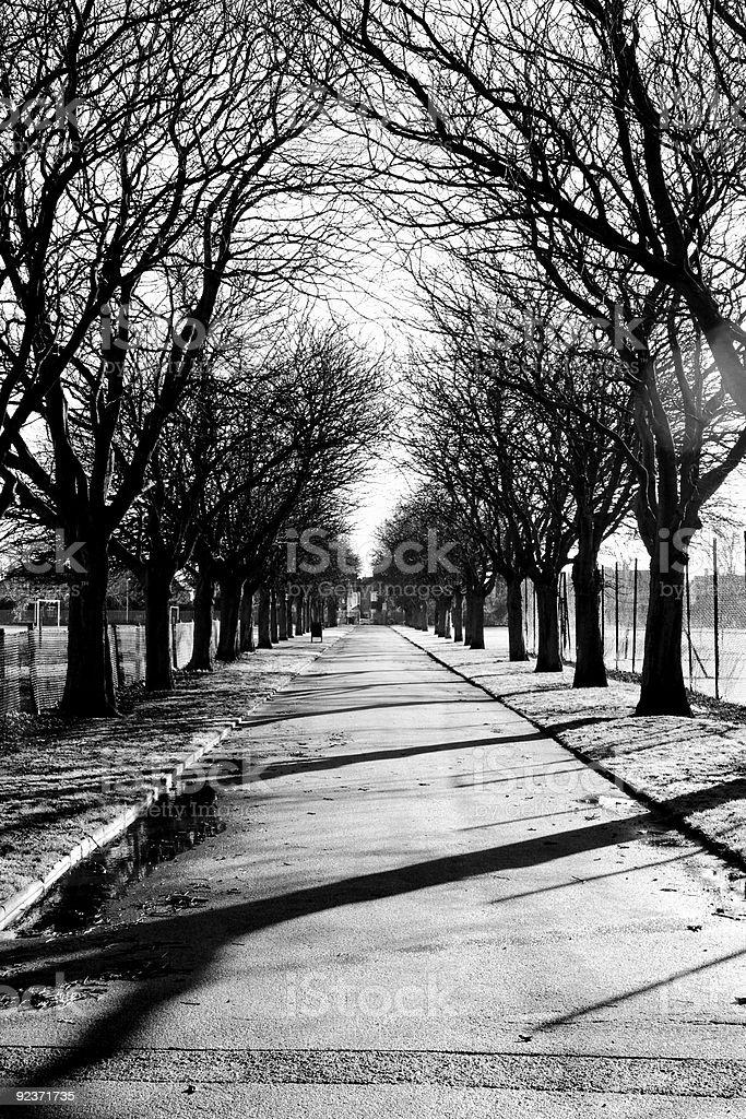 Winter im park Lizenzfreies stock-foto