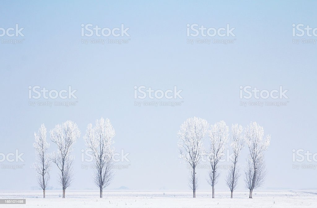 Winter in the plain stock photo